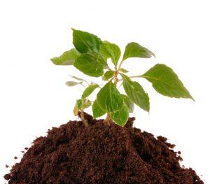 Использование в растеневодстве